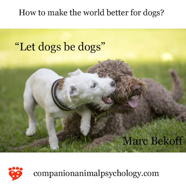Let dogs be dogs. Two dogs play as part of the better world series for dogs and cats