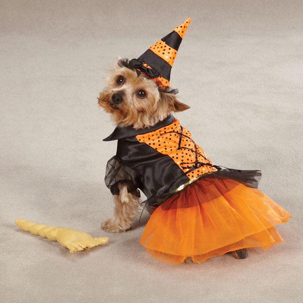 Resultado de imagen para disfraces para mascotas