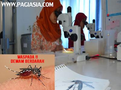 Sukses di Bantul dan Sleman, Nyamuk Ber-Wolbachia Juga Dilepas di Kota Yogyakarta