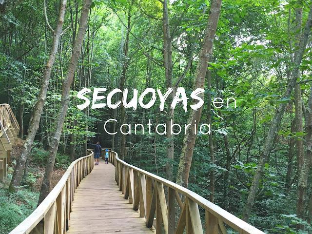 http://www.mediasytintas.com/2016/09/secuoyas-en-cantabria.html