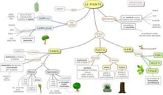http://www.mappe-scuola.com/2011/12/le-piante-radici-fusto-rami.html