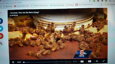 screen grab of bees from the Chronicle show