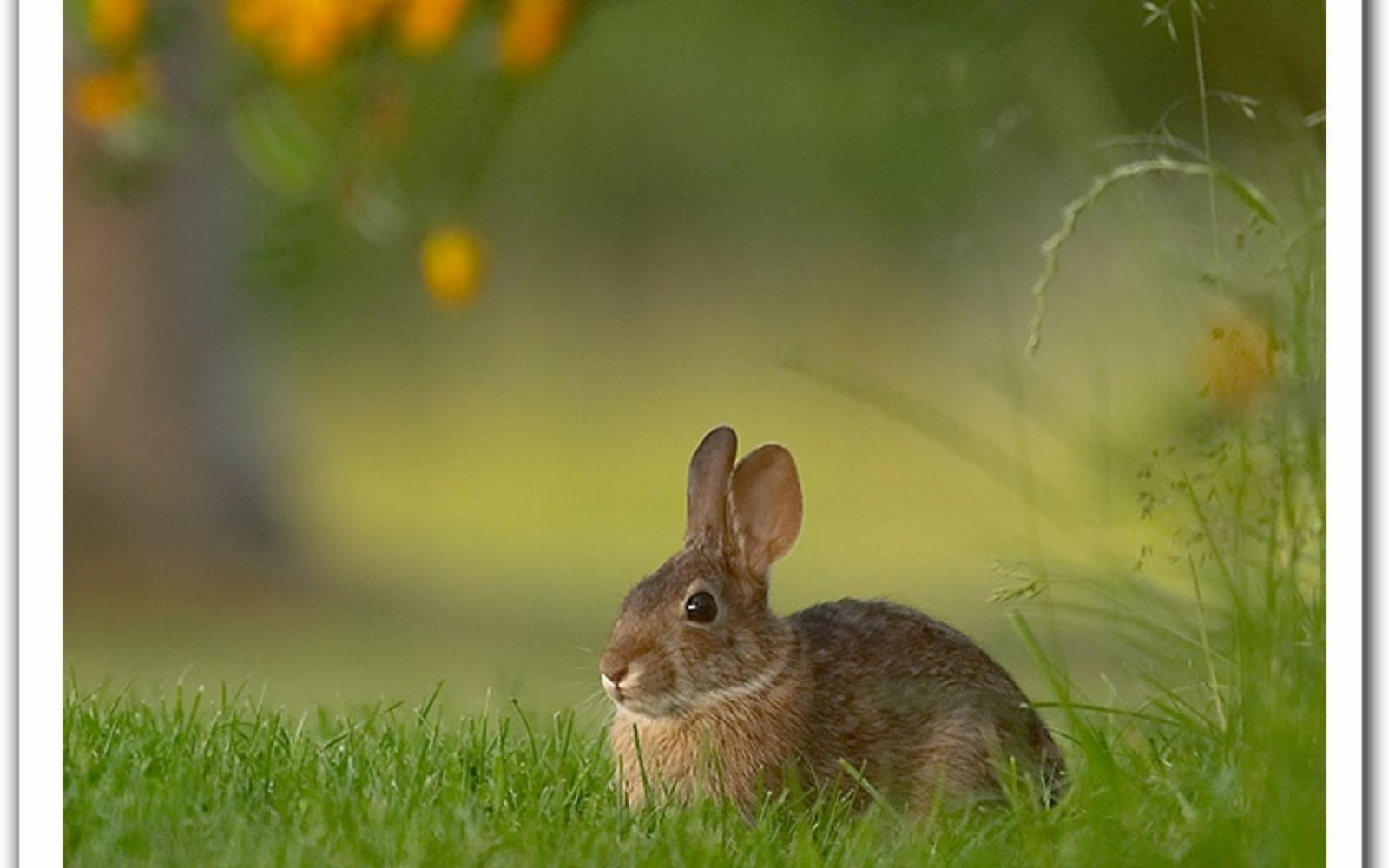 Cute Rabbits Hd Wallpapers Top 33 Beautiful And Cute Rabbit Wallpapers In Hd