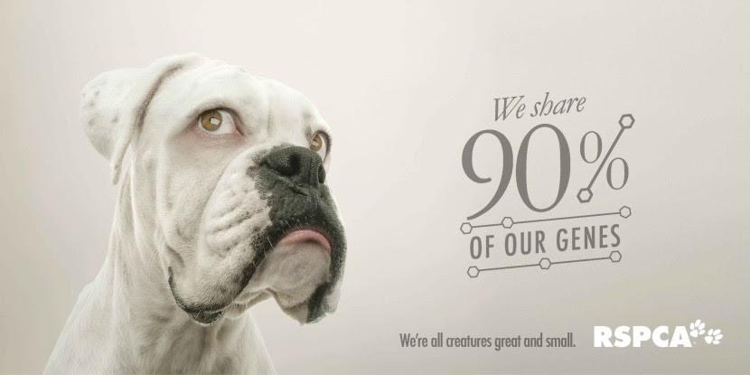 02-Dog-RSPCA-Human-Eyes-Animals-Advertising-Illustrations-www-designstack-co