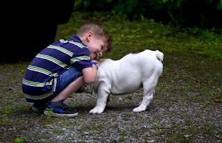 Le risque d'eczéma et d'asthme réduit grâce aux chiens