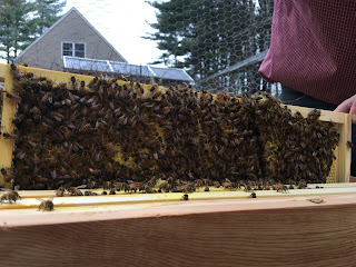 first check on bees