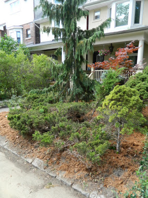 Leslieville Toronto front garden summer cleanup after Paul Jung Gardening Services