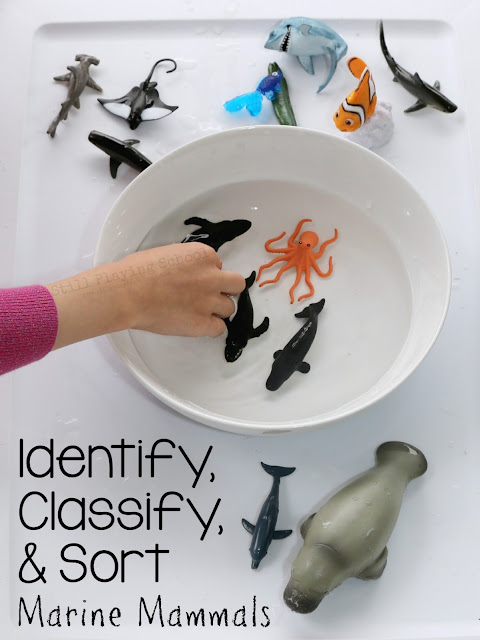 Kids can identify, classify, and sort marine mammals in this hands on science activity!