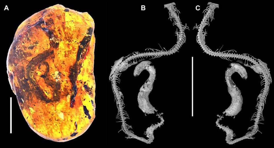 Bilim, Arkeolojik buluntular, Bilimsel, 100 milyon yıllık yılan sofili,Yılan fosili,100 milyon yıllık bebek yılan fosili,Dinozorlar çağında sürüngen,Bebek yılan fosili,A