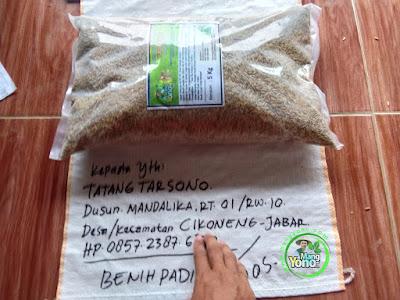 Benih Padi Pesanan TATANG TARSOMA Ciamis, Jabar.    Benih Sebelum di Packing.