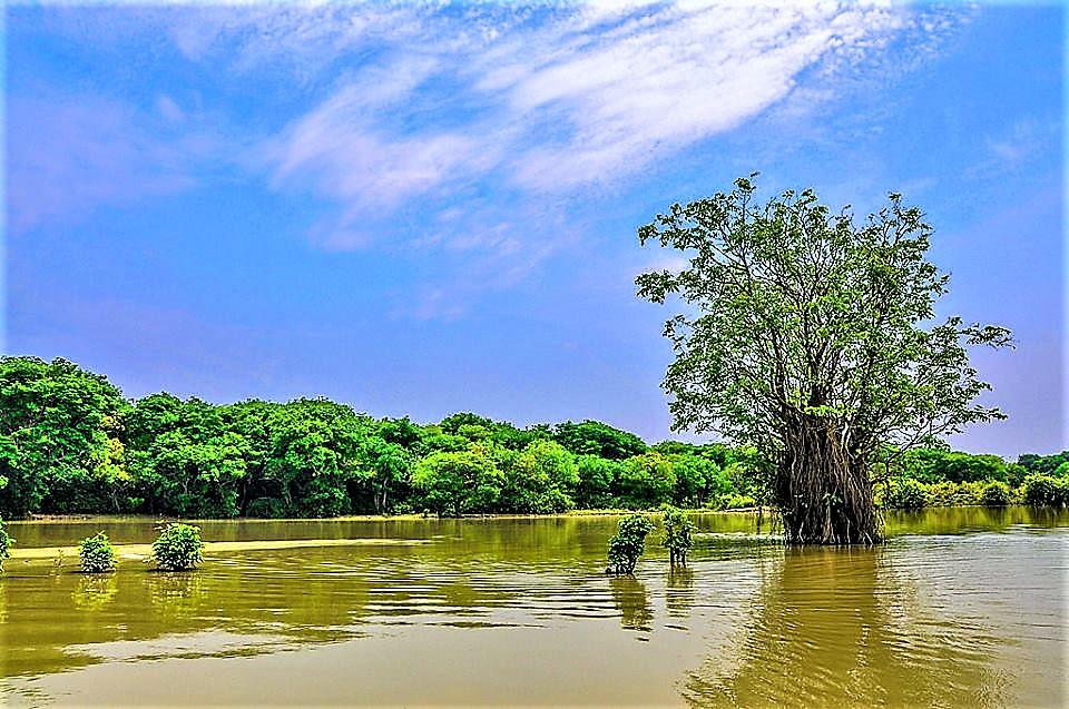 ratargul swamp forest sylhet