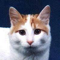 2d756870a Essa é o gato. Se fosse possível cruzar o homem com o gato, melhoraria o  homem, mas pioraria o gato.