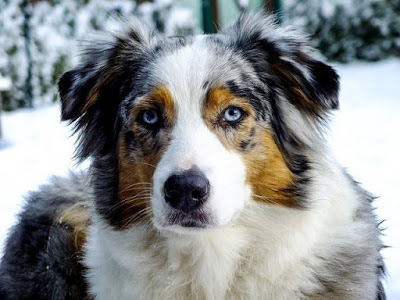 Χορτοφάγος σκύλος