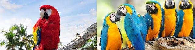 papaganlar-ne-yer