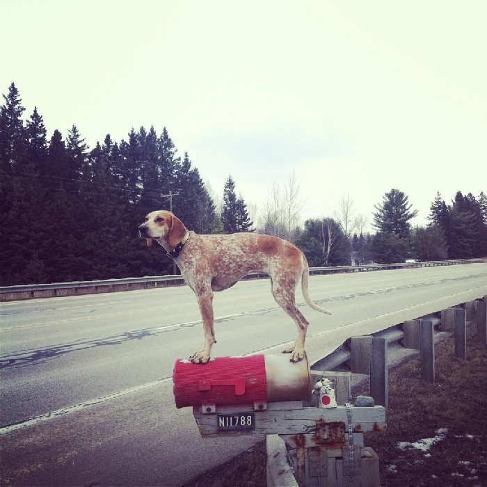 Послушная собака 28
