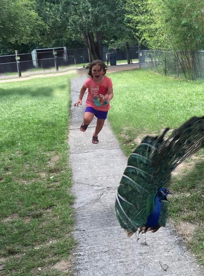 Banco de im genes para ver disfrutar y compartir - Fotos de un pavo real ...