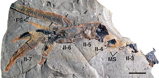 Escorpião gigantei encontrado em cratera de meteorito - Pentecopterus decorahensis - Fossil