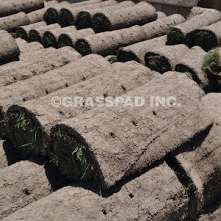 Grass Pad Bluegrass Sod
