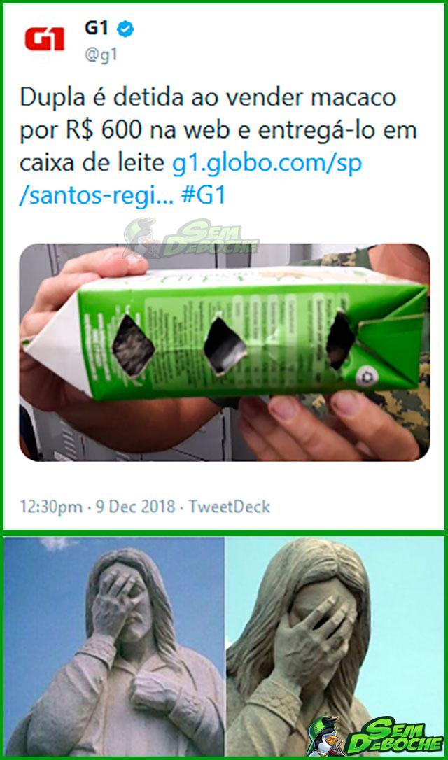 VENDENDO MACACO EM CAIXA DE LEITE