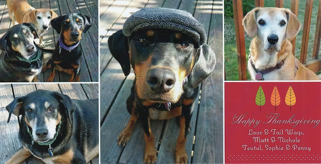 3 rescued dogs senior puppy hound doberman mixedbreed