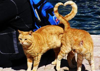Kucing hewan mamalia yang menggemaskan Cara Mengawinkan Kucing Yang Tepat