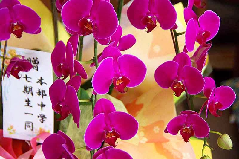 Orchids, pink,display,indoors, museum
