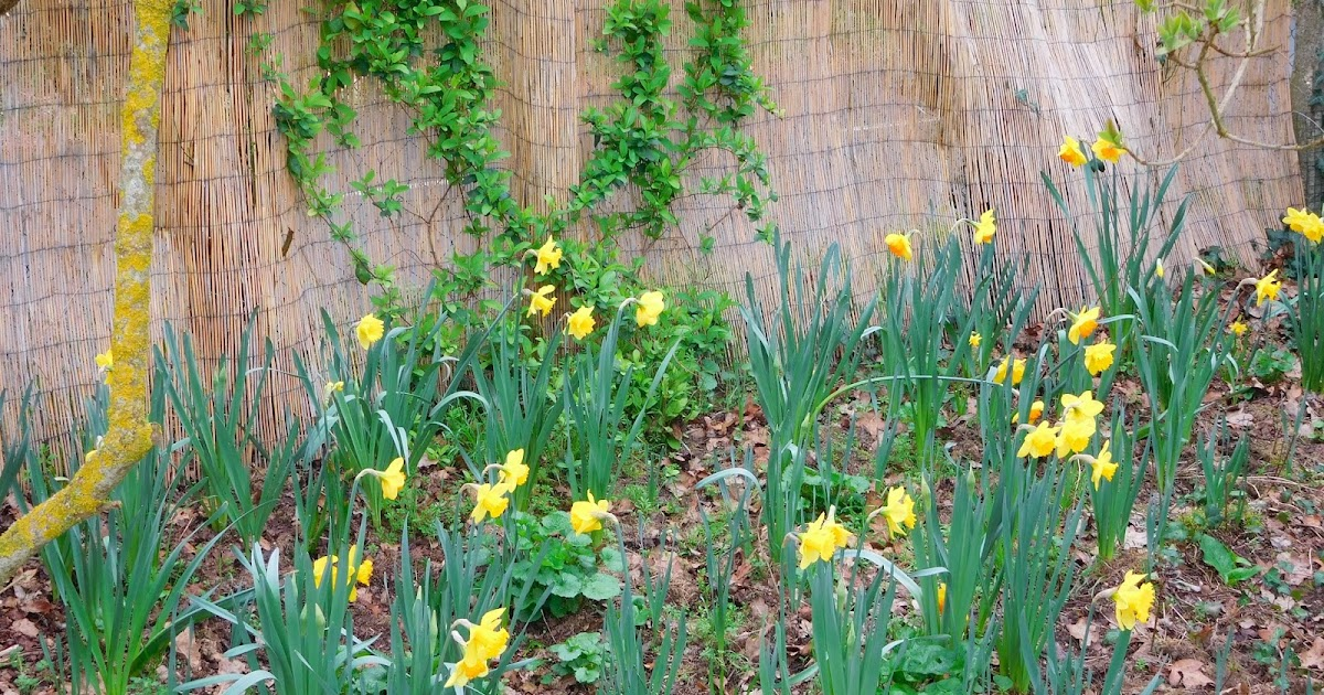 Le jardin de darius psychorigide - Comment supprimer le liseron au jardin ...