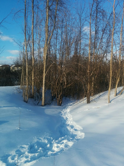 Winter paths in Natural Areas Ottawa Ontario Wild Here