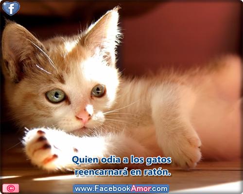 Imagenes Gatos Con Frase Imagui
