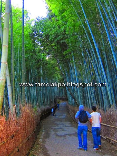 Sagano Bamboo Grove in Arashiyama, Kyoto