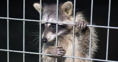 Ten Unusual Stories Involving Drunk Animals