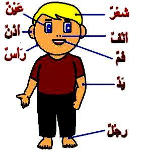 Lagu Arab Kanak Anak Paud Tk Sd Mengenal Angka Dan Anggota Tubuh Islam Agamaku