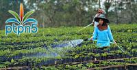PT Perkebunan Nusantara V, karir PT Perkebunan Nusantara V, lowongan kerja PT Perkebunan Nusantara V, karir PT Perkebunan Nusantara V