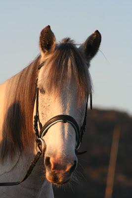 Equine Photography Cumbria