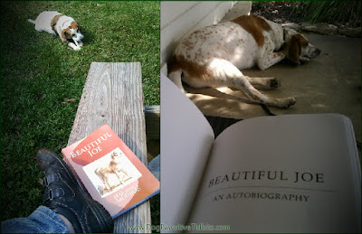 Dog Pawsitive Tidbits: Beautiful Joe Book Review