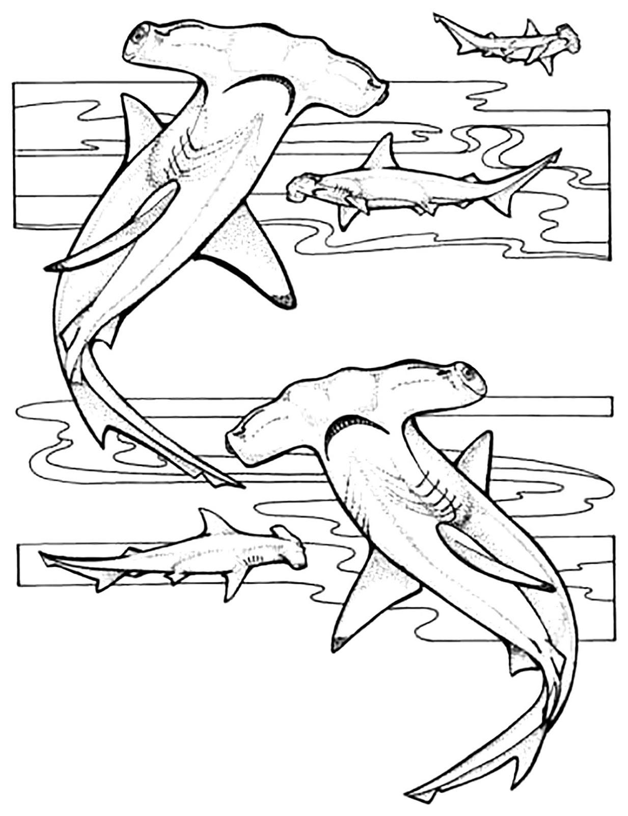 Tranh cho bé tô màu con cá mập 4