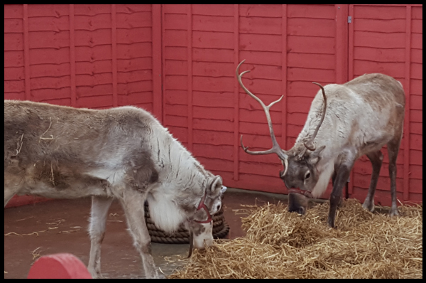 Tinsel & Twinkle at Drusillas