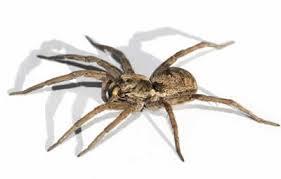 Serviço de Dedetização de Aranhas Sp