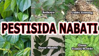 Pestisida alami, Cara membuat pestisida nabati, tanaman pembuat pestisida nabati