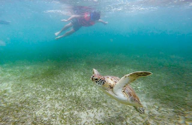 Niño buceando junto a una tortuga en Akumal