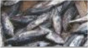 SOFIA 2018: Trends in global fish supply – NaijaAgroNet