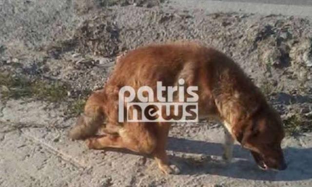 Απάνθρωπο: Έσπασαν τα πόδια σε σκύλο και τον παράτησαν αβοήθητο