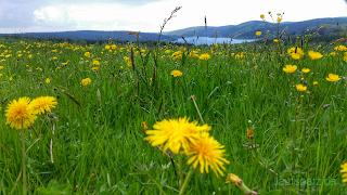Talsperre Eibenstock im Frühling
