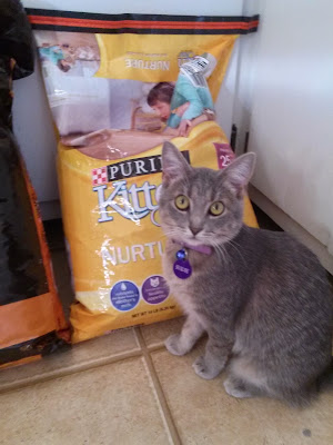 #Kitten in front of Purina Kitten Chow bag- CarmaPoodale.com