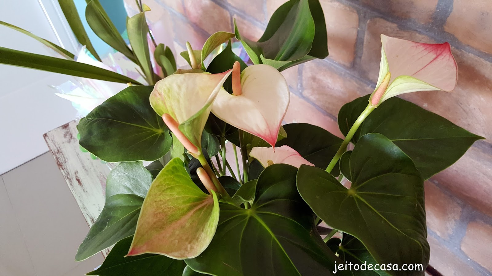 Ant rio uma tima planta para decora o de interiores for Plantas de interior anturio