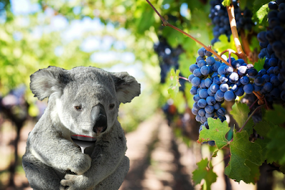 beaux-vin blog actualité vin panda