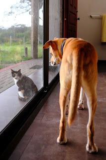cat outside, dog inside house