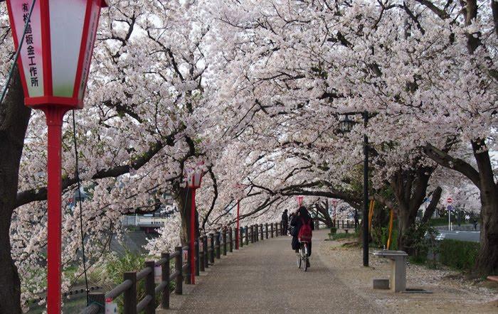 El Gobierno Japones pagará 10.000 yenes a turistas que visiten la Prefectura de Tottori