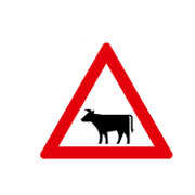 Крупный рогатый скот, животные