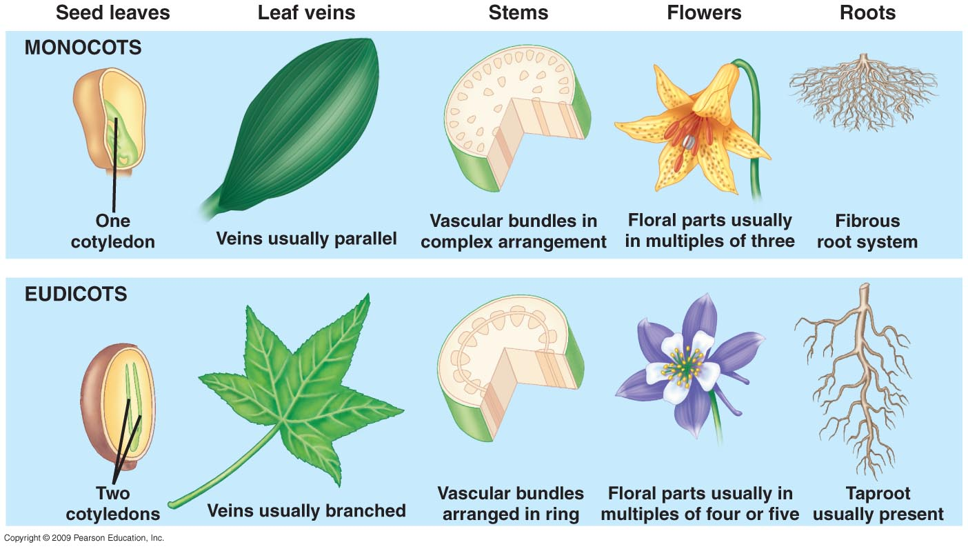 Science Form 2 Science Is Awesome Biodiversity